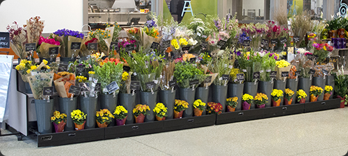 European style refrigerated floral display.